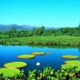 21 Mar 05 United Nations University South America's giant Pantanal wetlands, one of the world's most bio-diverse ecosystems, is at growing risk from intensive peripheral agricultural, industrial and urban development […]