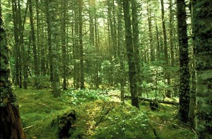 boreal-forest-floor-2607