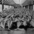 Census of Marine Life, Washington DC 5-Aug-2007 Historians detail collapse of bluefin tuna population off northern Europe; Tagging reveals migration, breeding secrets of declining population Ocean historians affiliated with the...