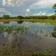 United Nations University 20-Jul-2008 700 leading experts convene at edge of Brazil's vast Pantanal to take stock, offer policy prescription to remedy wetlands crisis Leading world scientists convene in Brazil […]