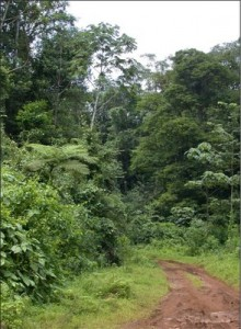 Road through abandoned pasture area, now second-growth in NE Costa Rica