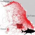 Census of Marine Life, Washington DC / Tagging of Pacific Palagics project, Pacific Grove, CA 22 June 2011 Decade of electronic tagging, tracking of 23 top Pacific Ocean predators reveals remarkable […]