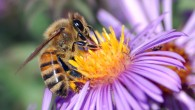 IPBES, Bonn / Office of the Science Advisor to the Prime Minister of Malaysia 26 Feb 2016 Assessment Details Options for Safeguarding Pollinators Kuala Lumpur – 26 February, 2016 – […]
