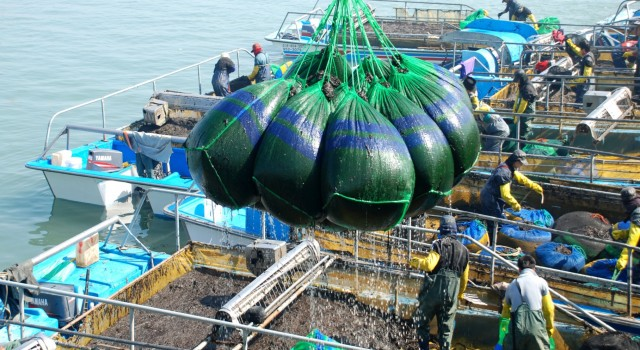 United Nations University – Institute for Water, Environment and Health, Hamilton, Canada Beyond sushi wrap: Expanding number of valuable uses drives astonishing growth of seaweed farming; Experts urge burgeoning industry […]